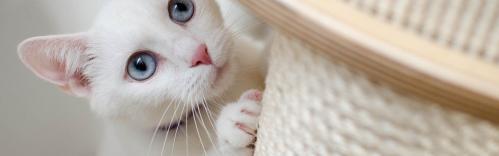 Les aristos chat 4